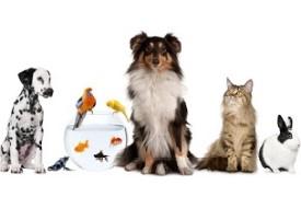 PET ( το κατοικίδιο μας )