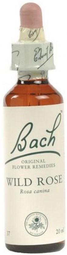 POWER HEALTH Bach Wild Rose Chestnut Ανθοΐαμα για την Αντιμετώπιση των Συναισθηματικών Απαιτήσεων της Καθημερινότητας, 20ml
